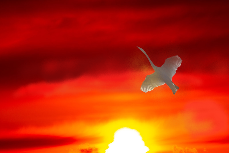 飛び立つ白鳥
